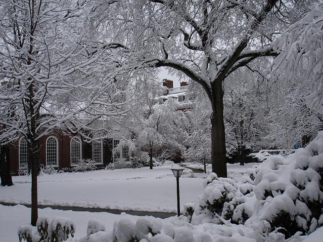 A typical winter scene, showing a front garden covered in snow